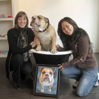 english bulldog portrait vancouver pet portrait
